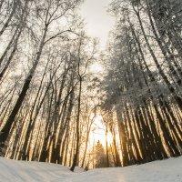 Зимний лес! :: Маry ...