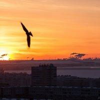 Город на закате :: Павел Жуков