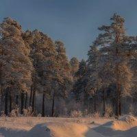 Лес, поседевший от мороза :: Елена Баландина