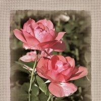 """Розы в """"рамке""""... :: Bosanat"""