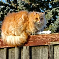 Кот мурзик :: Eвгений