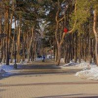 В парк... :: Юрий Стародубцев