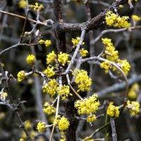 Январские цветы :: Ольга Голубева