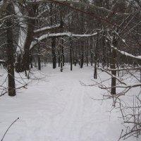 Лыжня.. :: Джулия К.