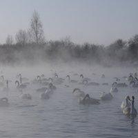 Лебединое озеро :: Cветлана Шагако