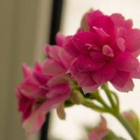 Flower :: Дарь Грэм