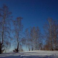 Белая береза :: Владимир Синицын