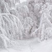 Зимний лес :: Виктор Фин