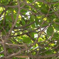 Попугай в естественной среде :: Freol Freol