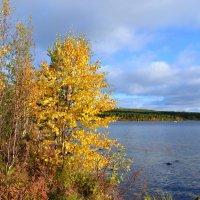 Осень в золоте :: Ольга