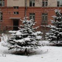 в нашем дворе :: Татьяна Осипова(Deni2048)