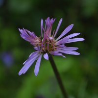 От бутона к цветку3 :: Vera Hloponina