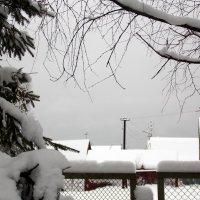 Снежное царство :: Фотогруппа Весна.