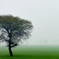 В лимонном тумане :: Сергей Рычков
