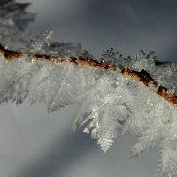 зимниие узоры :: Краснов  Ю Ф