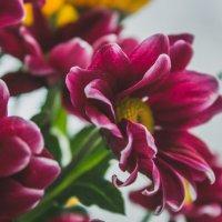 цветы :: Lis@ Geyko