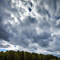 Лесное озеро :: Игорь Мухамадеев