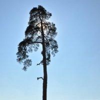 Гордое одиночество :: Андрей ТOMА©
