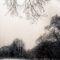 Зима :: Слава Ольшевская