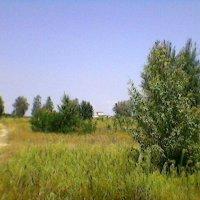 В Украине- август! :: Миша Любчик