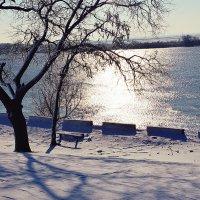 Зимняя глаль :: Надежда Кульбацкая