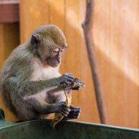 Могли бы и целый банан оставить.... :: Наталья