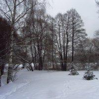IMG_1155 - Московская зима как она есть :: Андрей Лукьянов