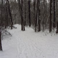 IMG_1098 - Московская зима как она есть :: Андрей Лукьянов