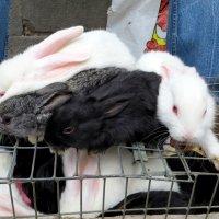 Кролик как символ года :: Наталья Джикидзе (Берёзина)