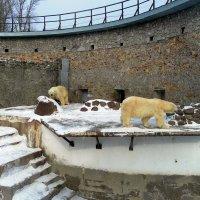 Белые медведи :: Агриппина