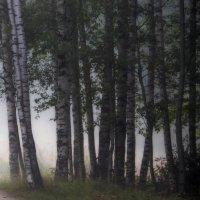 В объятьях тумана.... :: Юрий Цыплятников