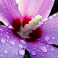 После дождя... :: Julia Martinkova