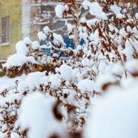 Зима :: Виктор Чебоксаров