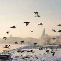 "Летяат уткии и дваа ""гууся"" :: Ирина Данилова"