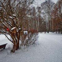 В зимнем парке. :: Oleg4618 Шутченко