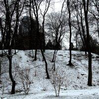 Зимний вечер в Ботаническом саду Фото№3 :: Владимир Бровко