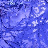 в синем цвете :: Ирина ***