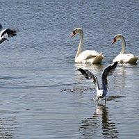 Не суетитесь, маленькие птицы :: Oleg Akulinushkin
