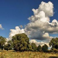 С деревьями о вечном говоря... :: Лесо-Вед (Баранов)