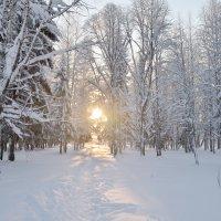 Солнышко в парке :: Viktor Pjankov
