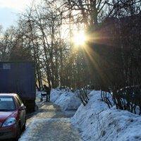 Зимнее солнце :: Yulia Sherstyuk