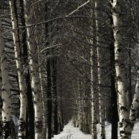 Лыжня :: Denis Avramchuk