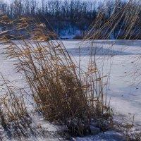 У озера... :: АЛЛА Смирнова