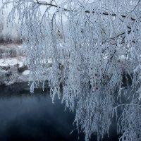 Под тяжестью зимы. :: vkosin2012 Косинова Валентина