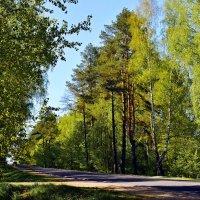 Зеленая  дорога. :: Валера39 Василевский.