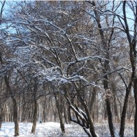 Морозный день... :: Тамара (st.tamara)