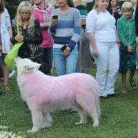Розовая собака джазового фестиваля :: Александра