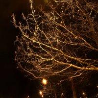 Зима :: dgozia.sergey Нескажу