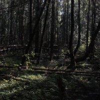 Утро в лесу :: Андрей Сорокин