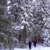 лыжная прогулка :: Валентина. .